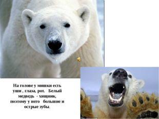 На голове у мишки есть уши , глаза, рот. Белый медведь - хищник, поэтому у не