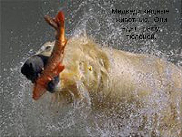 Медведи хищные животные. Они едят рыбу, тюленей.
