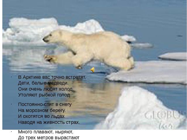 В Арктике вас точно встретят, Дети, белые медведи. Они очень любят холод, Ут...