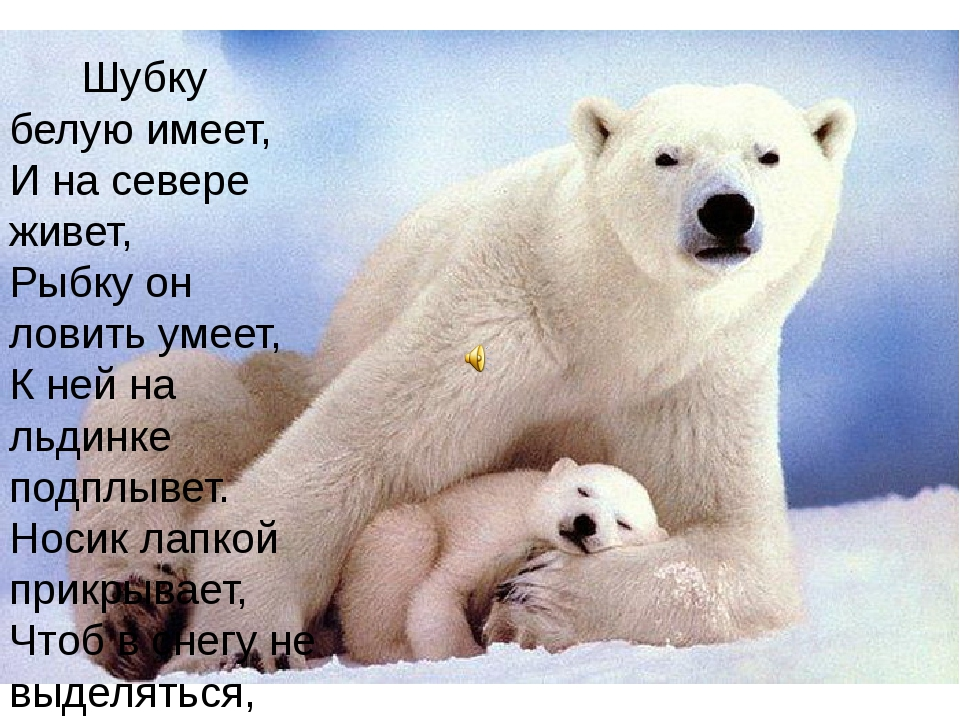 Шубку белую имеет, И на севере живет, Рыбку он ловить умеет, К ней на льдинк...