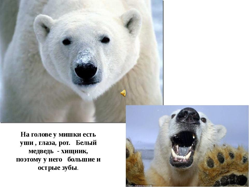 На голове у мишки есть уши , глаза, рот. Белый медведь - хищник, поэтому у не...