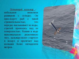 Летающий кальмар - небольшое животное размером с селедку. Он преследует рыб