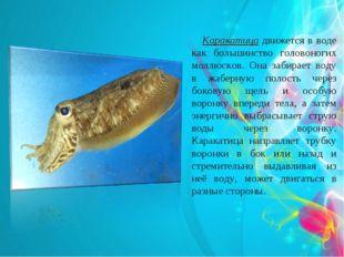Каракатица движется в воде как большинство головоногих моллюсков. Она забира
