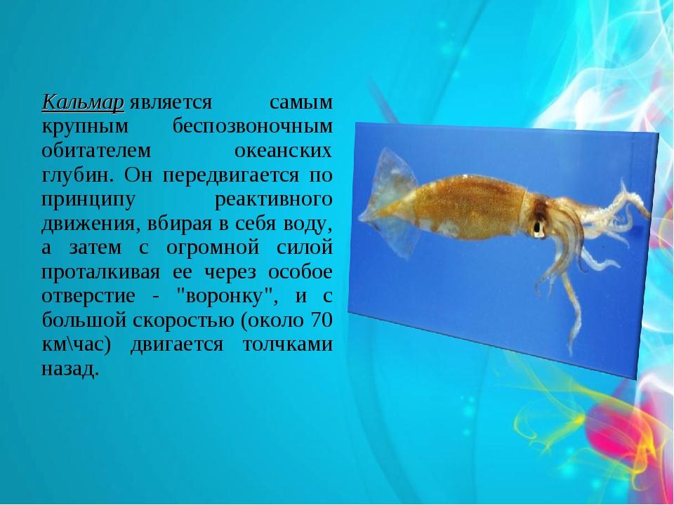 Кальмарявляется самым крупным беспозвоночным обитателем океанских глубин. Он...