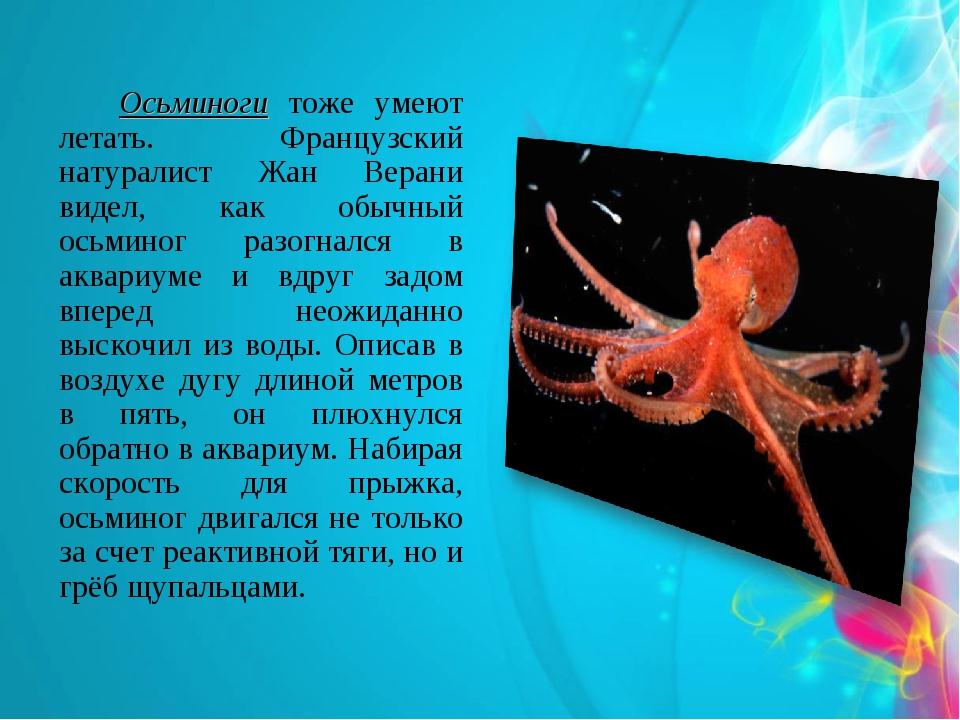 Осьминоги тоже умеют летать. Французский натуралист Жан Верани видел, как об...