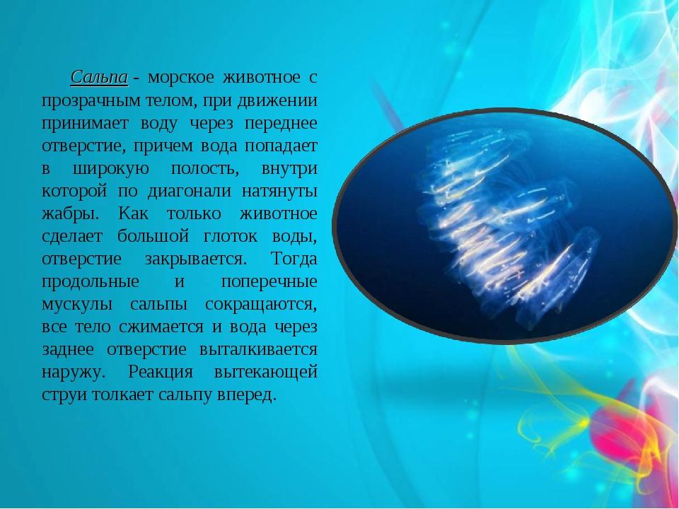 Сальпа- морское животное с прозрачным телом, при движении принимает воду че...