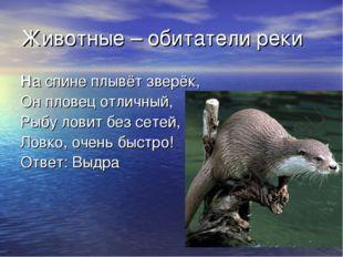 Животные – обитатели реки На спине плывёт зверёк, Он пловец отличный, Рыбу ло