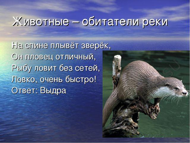 Животные – обитатели реки На спине плывёт зверёк, Он пловец отличный, Рыбу ло...