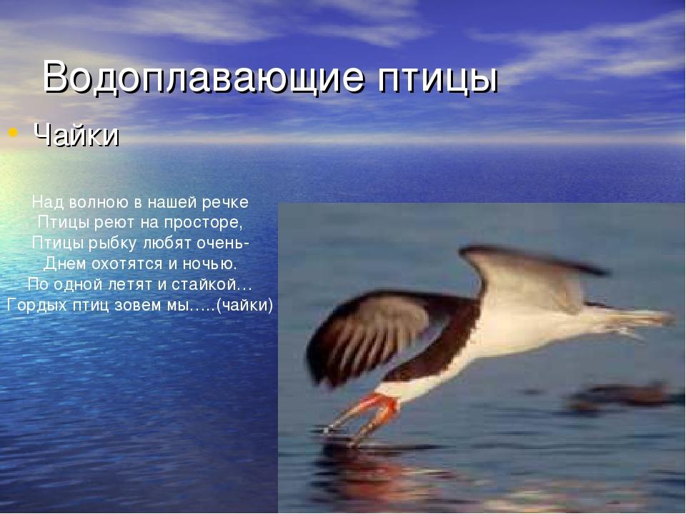 Водоплавающие птицы Чайки Над волною в нашей речке Птицы реют на просторе, Пт...