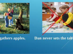 Dan gathers apples. Dan never sets the table.