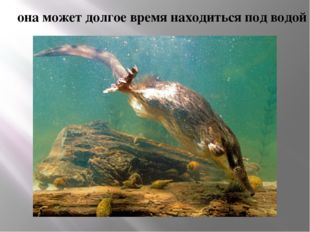 она может долгое время находиться под водой