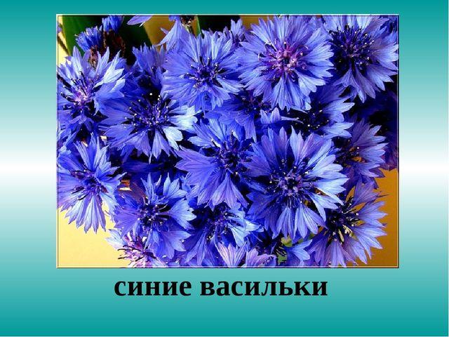синие васильки