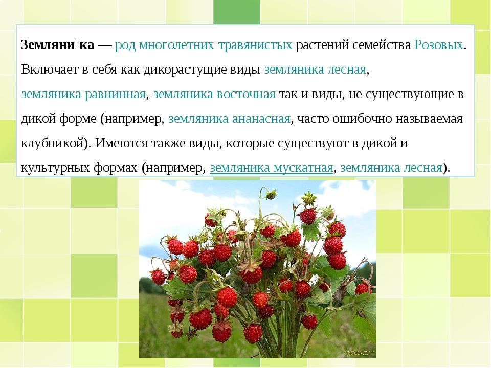 Земляни́ка—родмноголетнихтравянистыхрастений семействаРозовых. Включает...