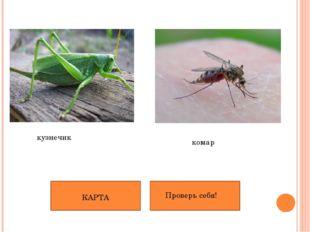 кузнечик комар КАРТА Проверь себя!