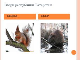 Звери республики Татарстан БЕЛКА БОБР