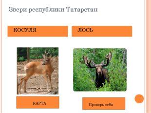 Звери республики Татарстан КОСУЛЯ ЛОСЬ КАРТА Проверь себя