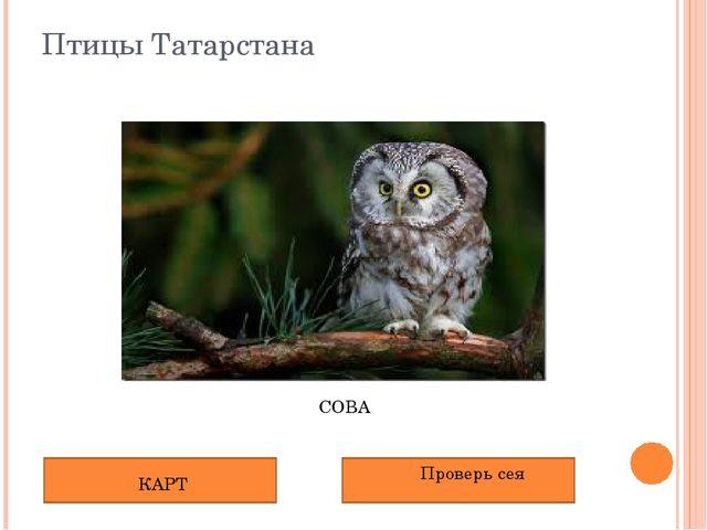 Птицы Татарстана СОВА КАРТ Проверь сея