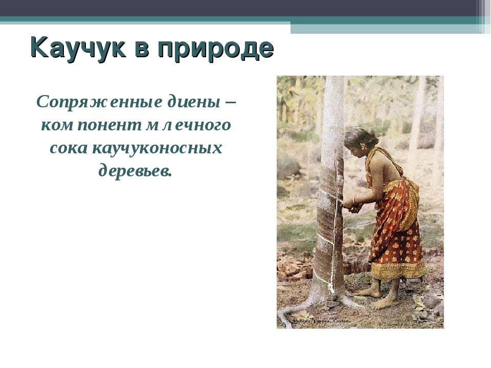 Каучук в природе Сопряженные диены – компонент млечного сока каучуконосных де...