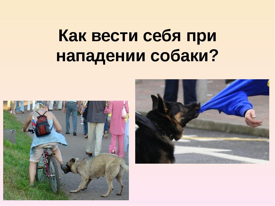 Как вести себя при нападении собаки?