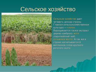 Сельское хозяйство Сельское хозяйстводает четверть дохода страны. Главная се