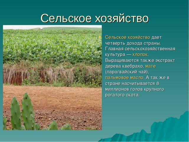 Сельское хозяйство Сельское хозяйстводает четверть дохода страны. Главная се...