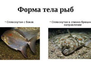 Форма тела рыб Сплюснутая с боков Сплюснутая в спинно-брюшном направлении