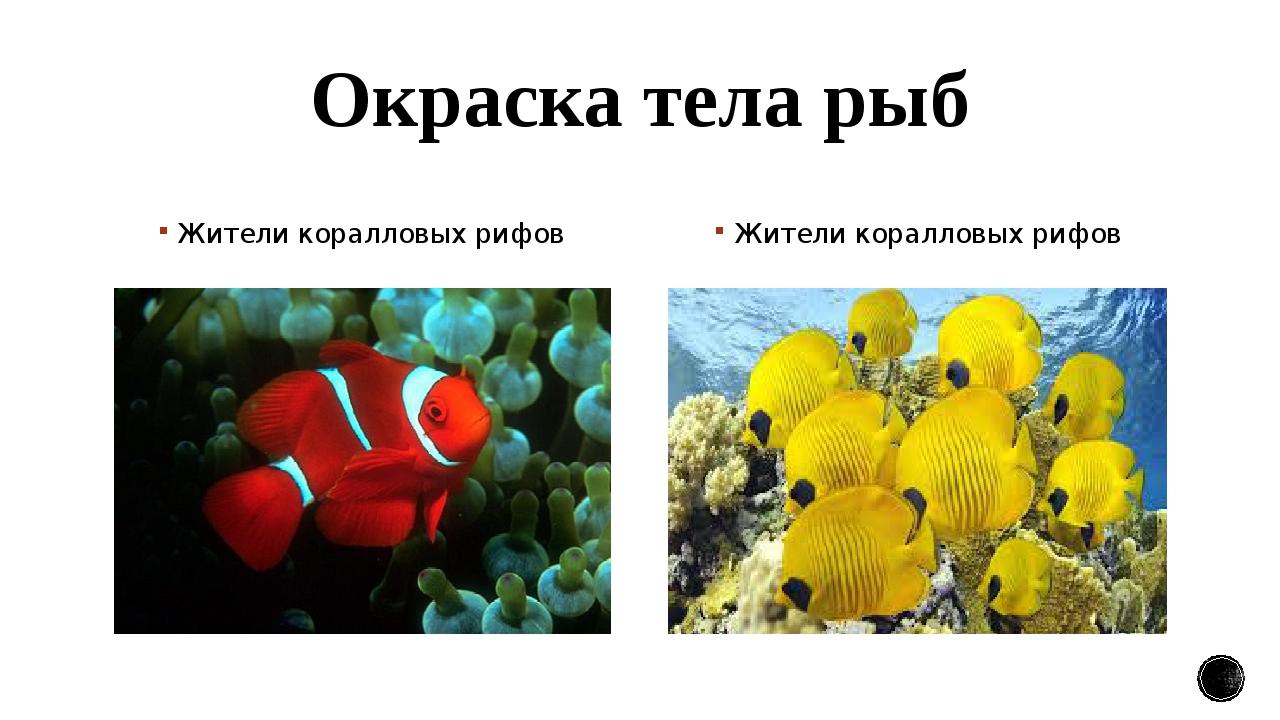 Окраска тела рыб Жители коралловых рифов Жители коралловых рифов
