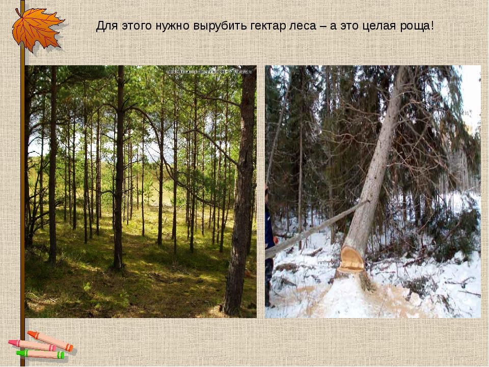 Для этого нужно вырубить гектар леса – а это целая роща!