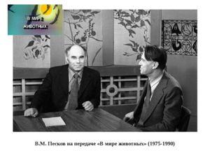 В.М. Песков на передаче «В мире животных» (1975-1990) В.М. Песков на передач
