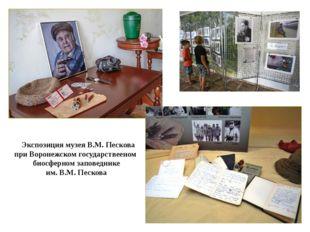 Экспозиция музея В.М. Пескова при Воронежском государствееном биосферном зап