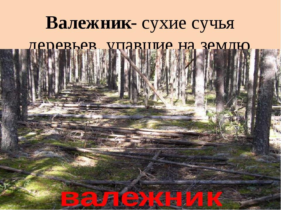 Валежник- сухие сучья деревьев, упавшие на землю.