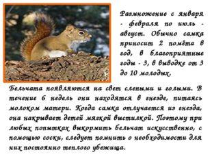 Размножение с января - февраля по июль - август. Обычно самка приносит 2 помё