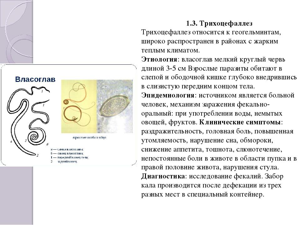 1.3. Трихоцефаллез Трихоцефаллез относится к геогельминтам, широко распростра...