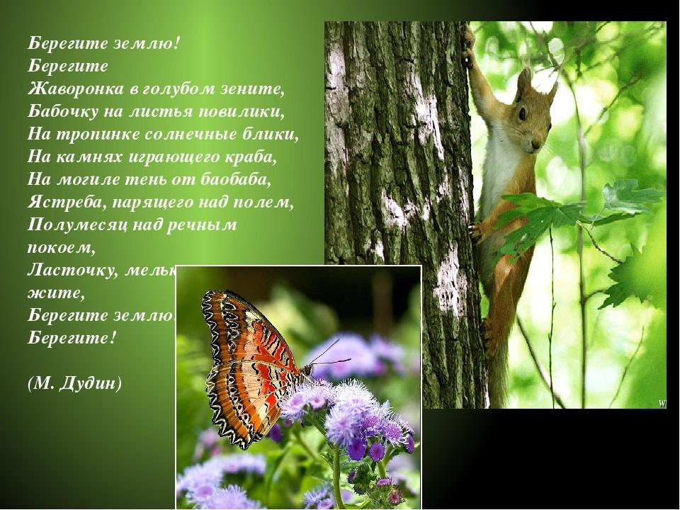 Берегите землю! Берегите Жаворонка в голубом зените, Бабочку на листья повили...