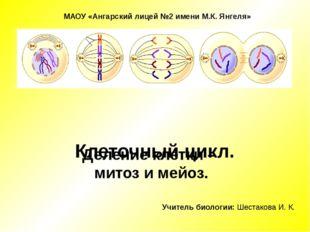 Клеточный цикл. Деление клетки – митоз и мейоз. Учитель биологии: Шестакова