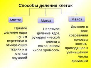 Амитоз Митоз Мейоз Прямое деление ядра путем перетяжки в отмирающих тканях и