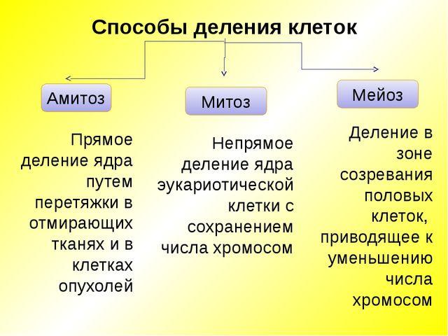 Амитоз Митоз Мейоз Прямое деление ядра путем перетяжки в отмирающих тканях и...