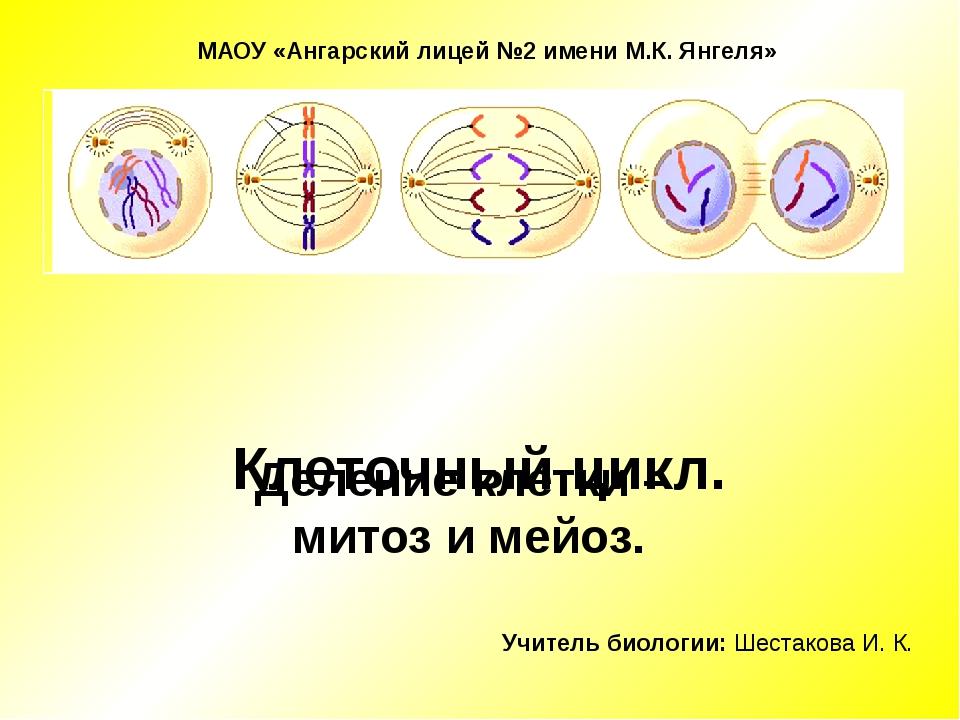 Клеточный цикл. Деление клетки – митоз и мейоз. Учитель биологии: Шестакова...