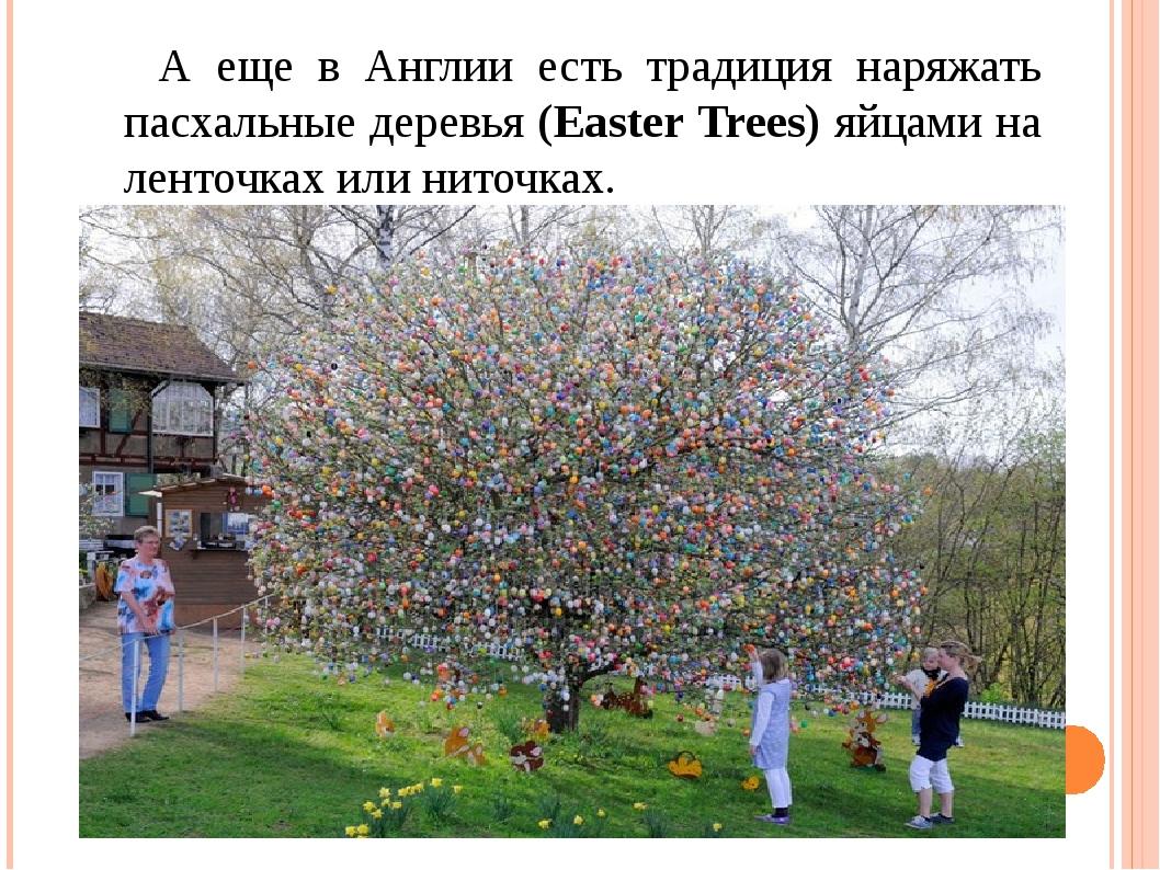 А еще в Англии есть традиция наряжать пасхальные деревья (Easter Trees) яйца...