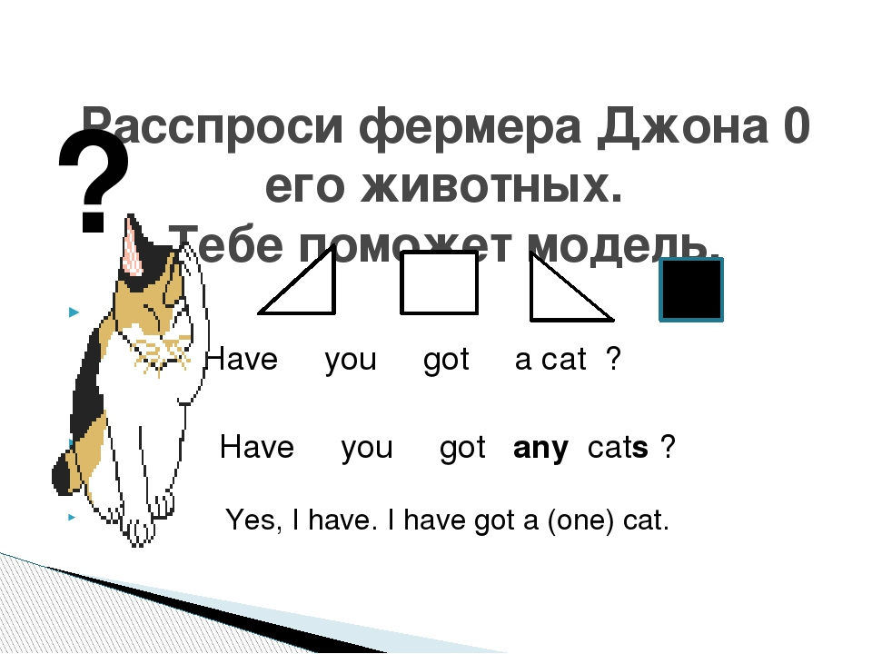 Have you got a cat ? Have you got any cats ? Yes, I have. I have got a (one)...