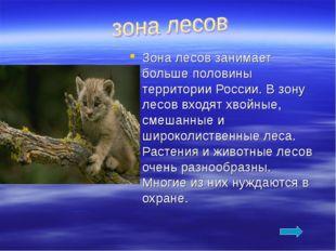 Зона лесов занимает больше половины территории России. В зону лесов входят хв