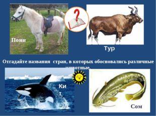 Отгадайте названия стран, в которых обосновались различные животные. Тур Сом