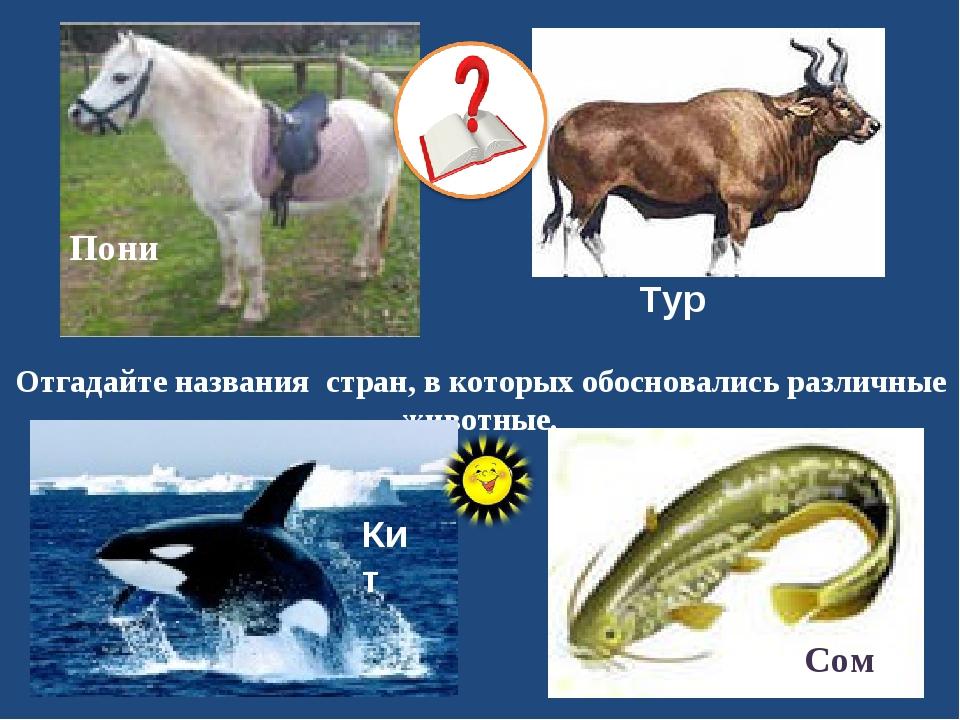 Отгадайте названия стран, в которых обосновались различные животные. Тур Сом...