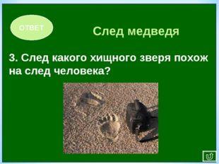 3. След какого хищного зверя похож на след человека? ОТВЕТ След медведя