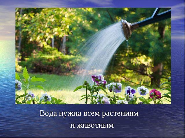 Вода нужна всем растениям и животным