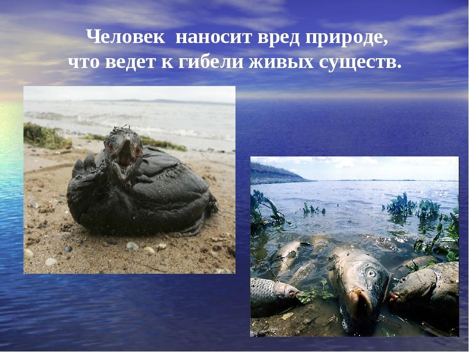 Человек наносит вред природе, что ведет к гибели живых существ.