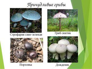 Строфария сине-зеленая Гриб-зонтик Порховка Дождевик Причудливые грибы