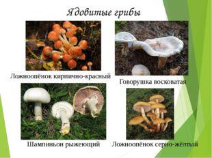 Ядовитые грибы Ложноопёнок кирпично-красный Шампиньон рыжеющий Говорушка воск