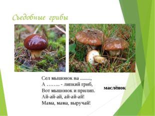 Съедобные грибы Сел мышонок на ........, А …….. - липкий гриб, Вот мышонок и