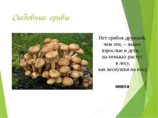 Съедобные грибы Нет грибов дружней, чем эти, – знают взрослые и дети, - на пе